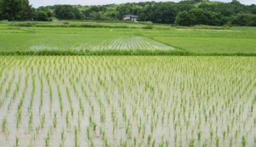 お米がむすぶ国際結婚の和